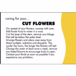 CUT FLOWERS CARE CARD
